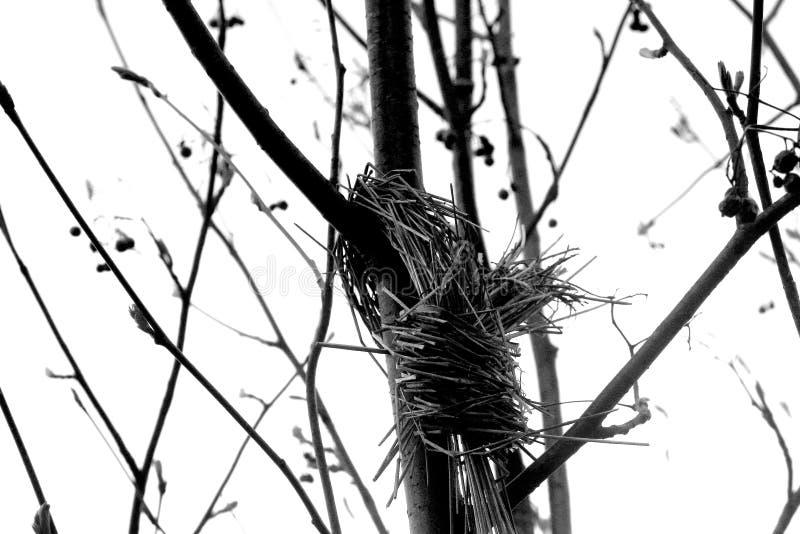 Kije na drzewie zdjęcie royalty free