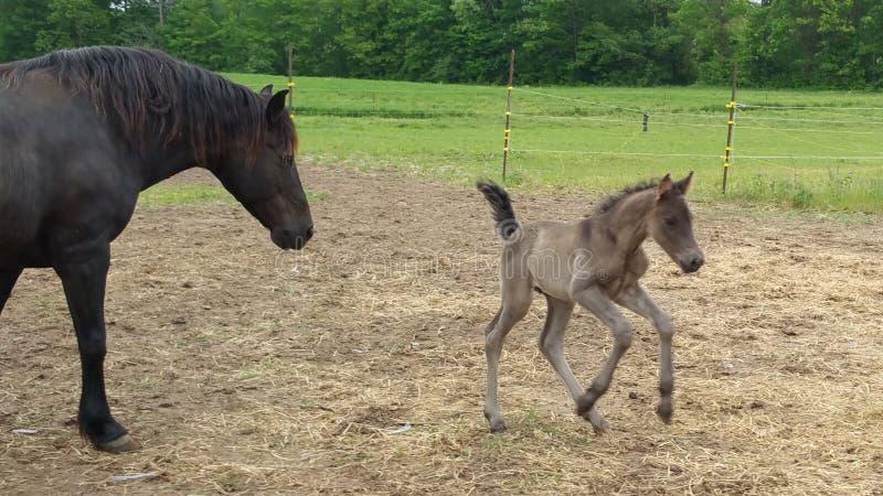 Kijk Ma, kan ik springen! royalty-vrije stock fotografie