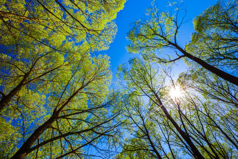 Kijk omhoog in het bos aan de blauwe hemel royalty-vrije stock fotografie