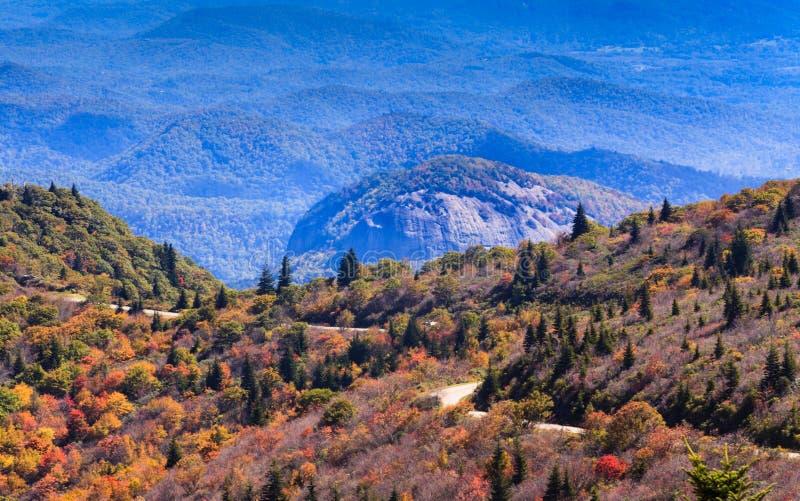 Kijkend Glasrots Noord-Carolina stock afbeeldingen