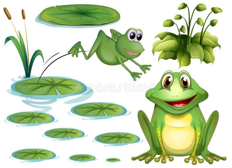 Kikker en bladeren stock illustratie