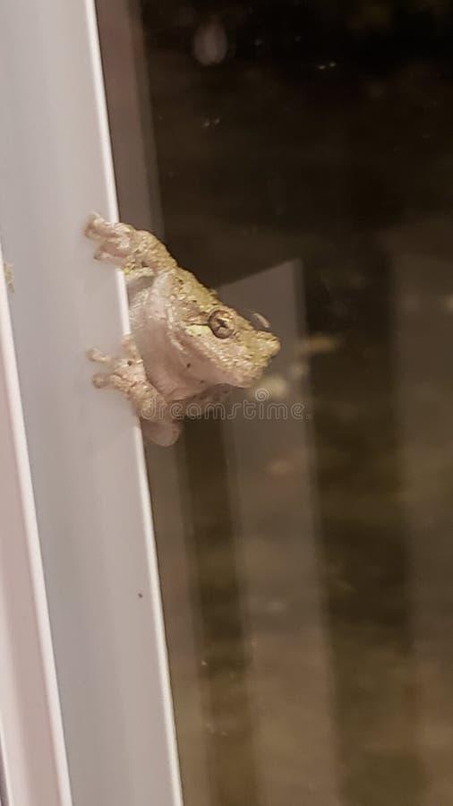 Kikker op de deur stock afbeelding
