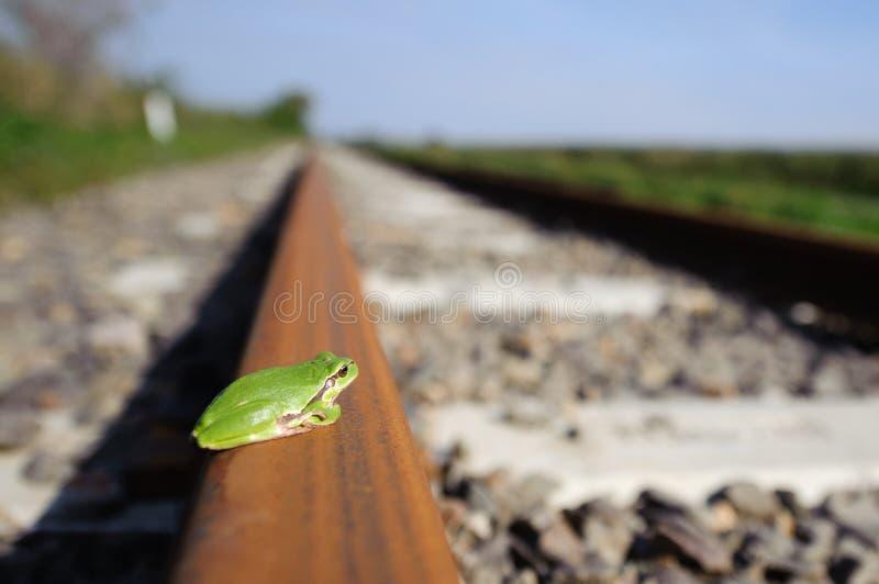 Kikker op railrway stock afbeeldingen