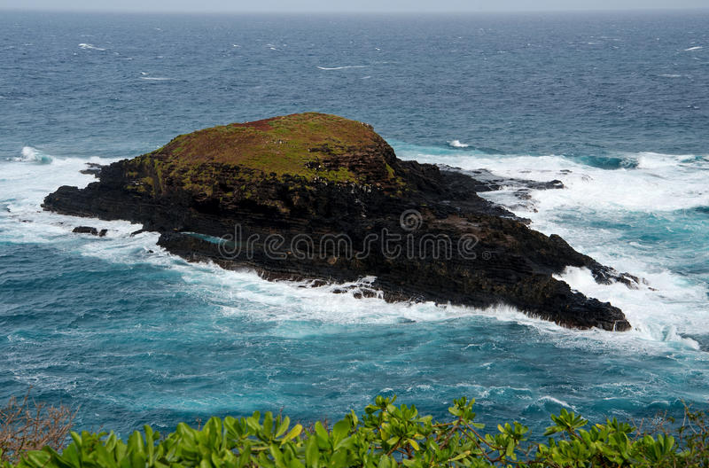 Kilauea Point. This tiny islet at the tip of Kilauea Point gets punded by the relentless waves from all sides royalty free stock image