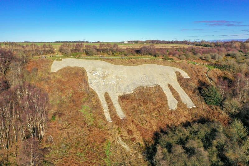 Kilburn wit paard royalty-vrije stock afbeeldingen
