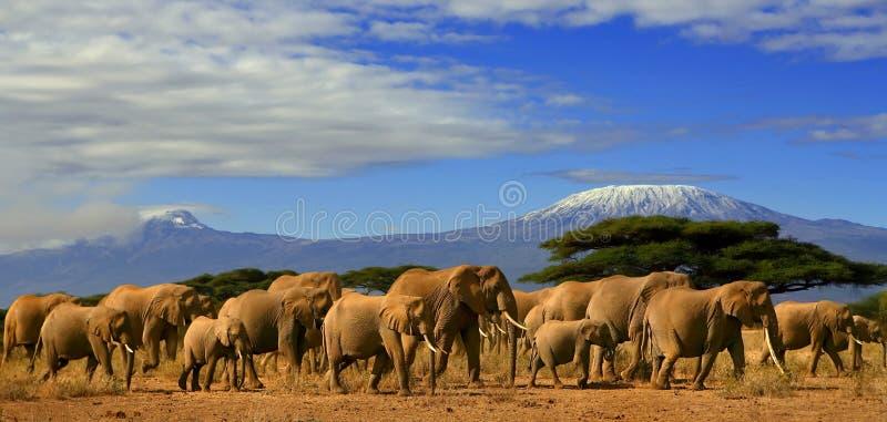 kilimanjaro слонов иллюстрация вектора