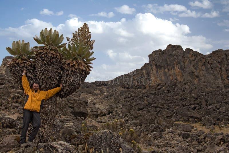Kilimanjaro 010 Imagen de archivo libre de regalías