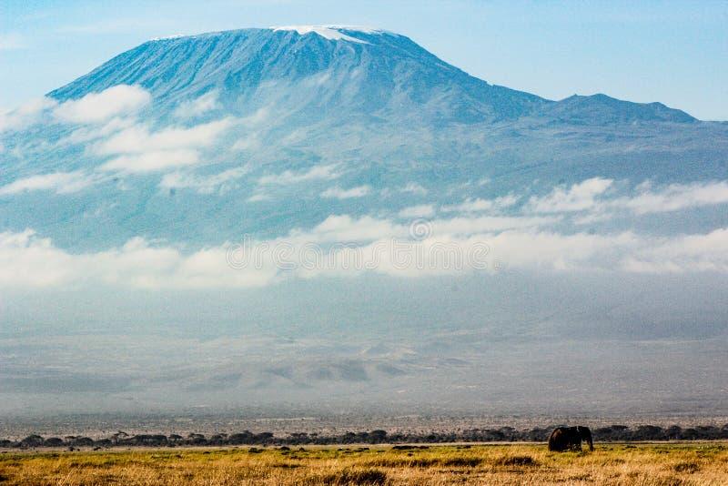 kilimanjaro 库存照片