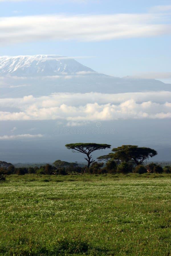 Kilimanjaro royalty-vrije stock afbeelding