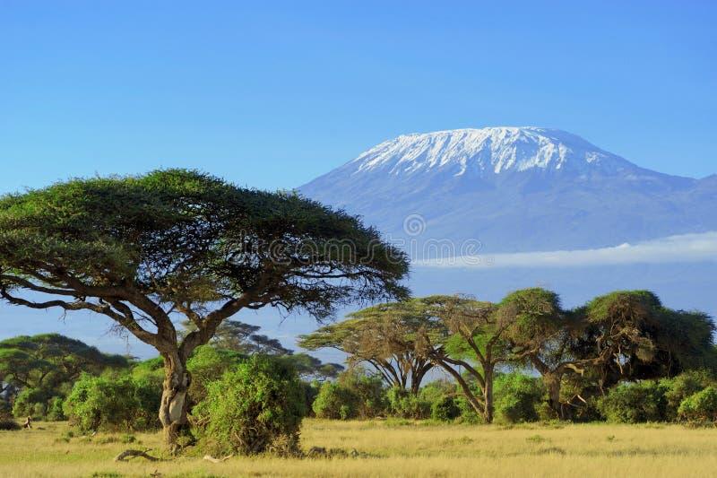 kilimanjaro image stock
