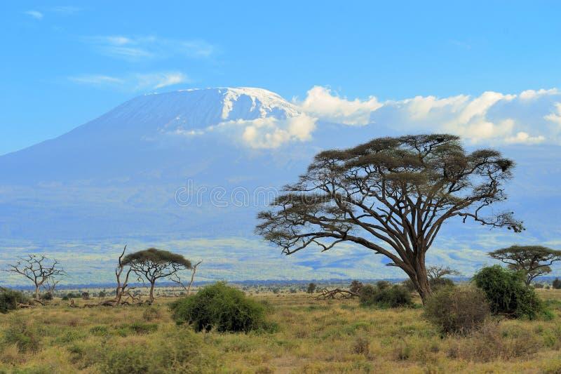 Download Kilimanjaro стоковое фото. изображение насчитывающей величественно - 40584154