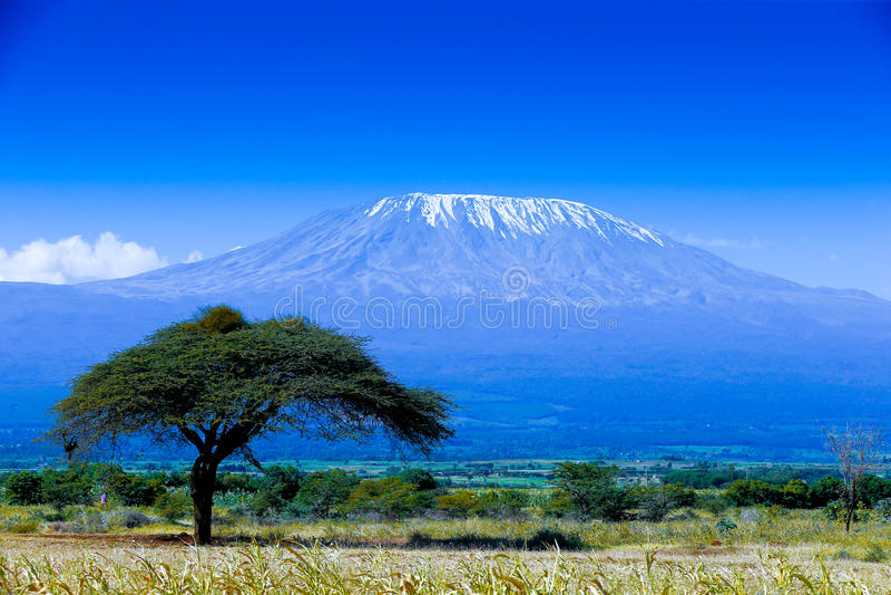 kilimanjaro stock foto's