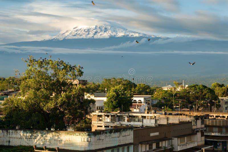 kilimanjaro fotos de stock royalty free