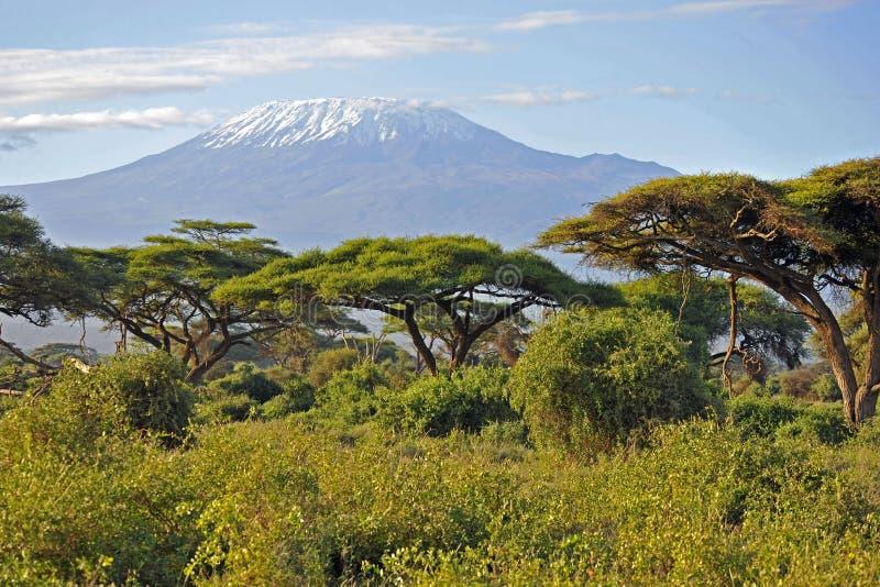 Kilimanjaro Kenya image stock