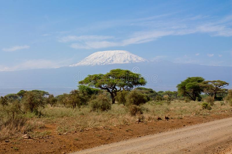 Kilimanjaro highest mountain in Africa view fron road. Kilimanjaro mountain above savanna bush scenic view from Amboseli national wild nature and wildlife game royalty free stock photography