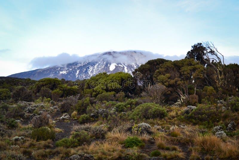 Kilimanjaro odgórny widok obraz royalty free
