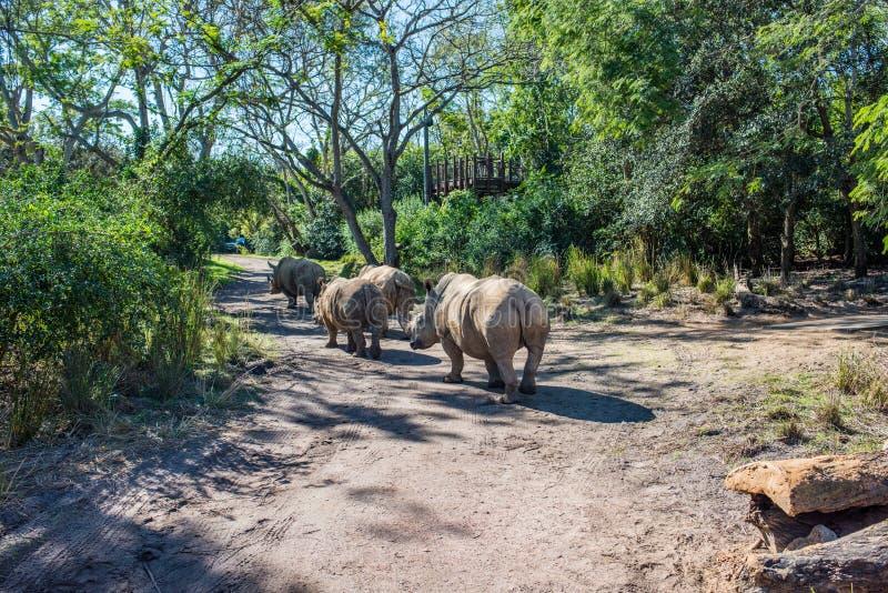 Kilimanjaro safari på djurriketen på Walt Disney World arkivbild