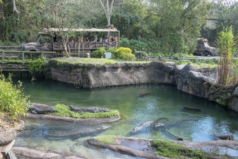 Kilimanjaro Safaris, Disney World, Animal Kingdom, Travel. Kilimanjaro Safaris ride at Walt Disney World in the Animal Kingdom park. Orlando, Florida is a royalty free stock image