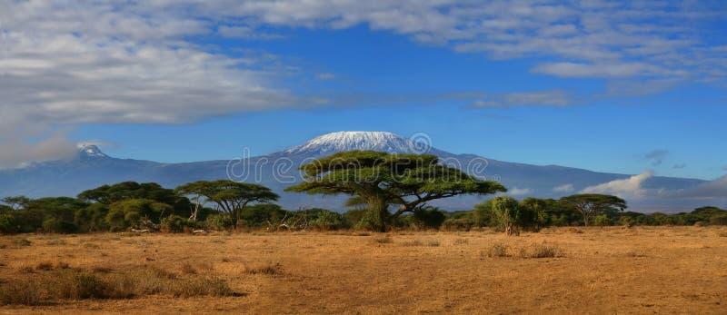 kilimanjaro wide royaltyfri bild