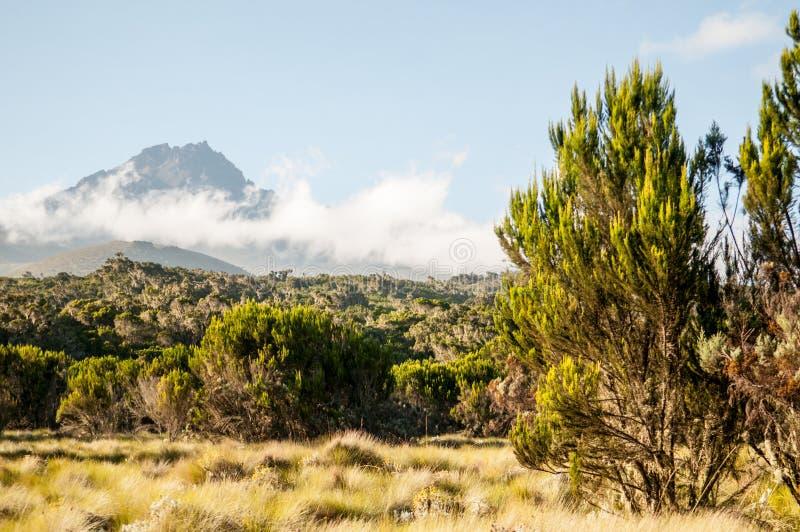 Kilimanjaro widok górski fotografia stock