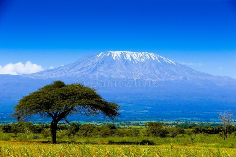 Kilimanjarolandschap stock afbeelding