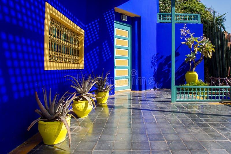Kilka kaktus w żółtych garnkach obrazy royalty free