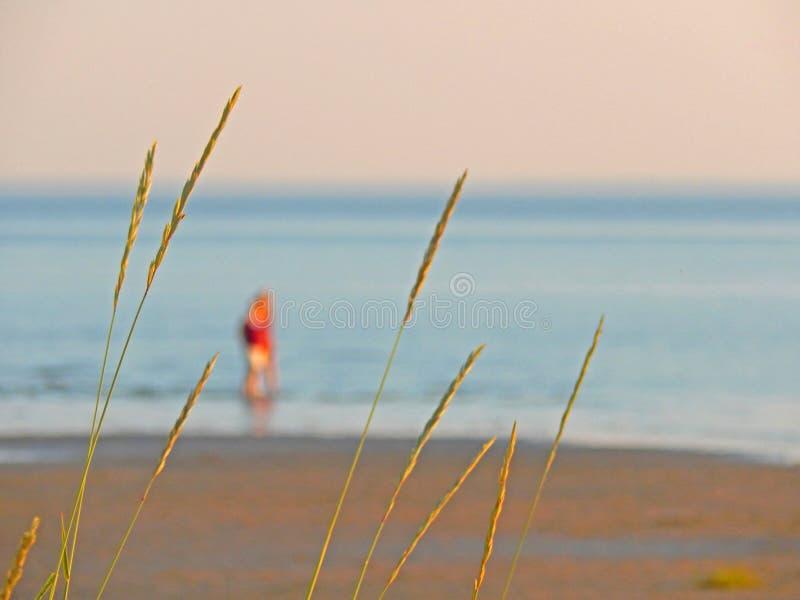 Kilka ludzie spaceruje w płytkich wodach przy Białym Dennym wybrzeżem w północy Rosja fotografia stock