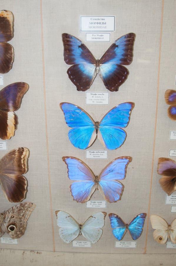 Kilka przy wystawą motyl obrazy royalty free
