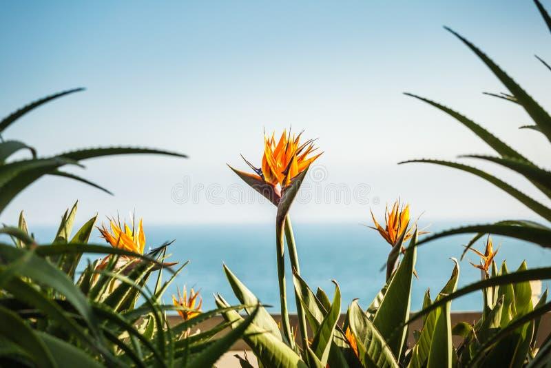 Kilka strelizia kwiaty fotografia stock