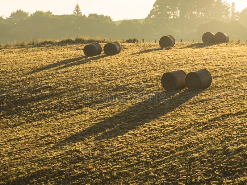 Kilka wielkie round bele kłaść w uprawy polu siano obrazy royalty free