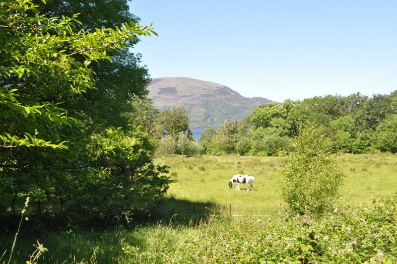 Killarney Nationaal Park, Ierland royalty-vrije stock foto