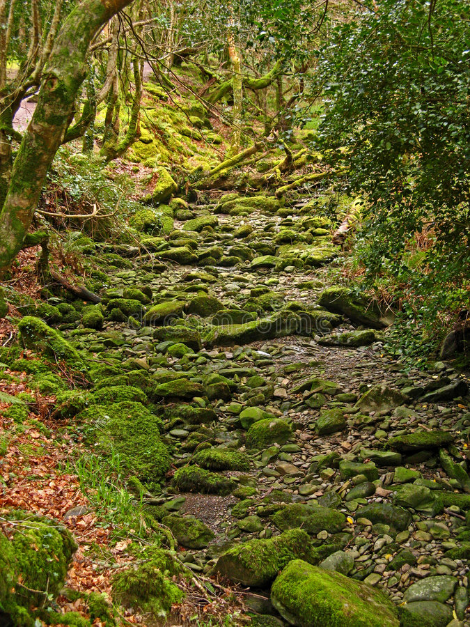 Killarney National Park 10. Killarney National Park in County Kerry, Ireland royalty free stock photo