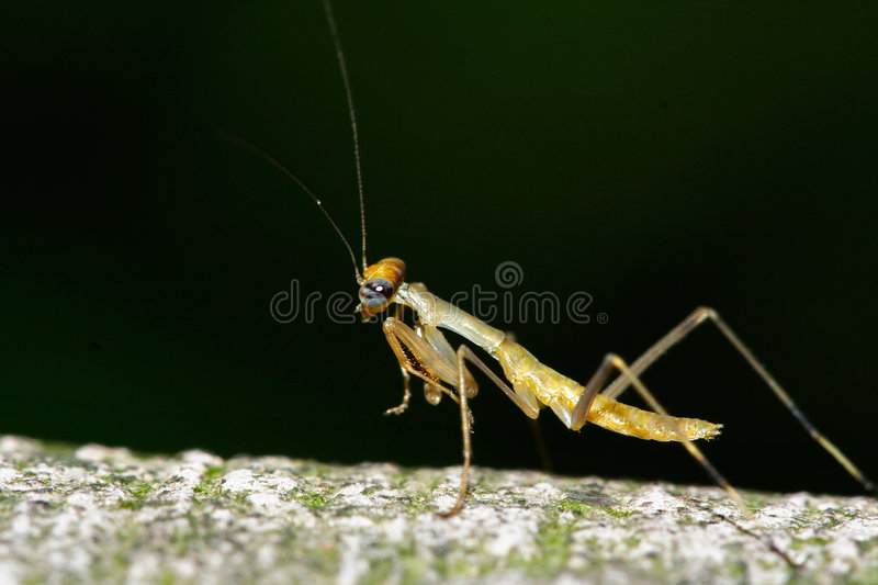 Killer of the insects royalty free stock photography