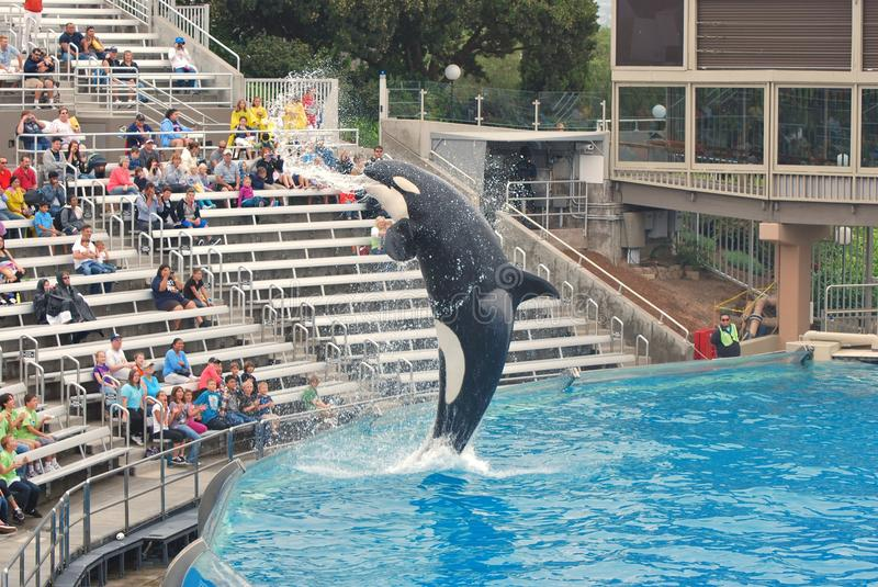 Download Killer Whale Spraying Crowd With Mouth At Seaworld Editorial Photo - Image: 21662021