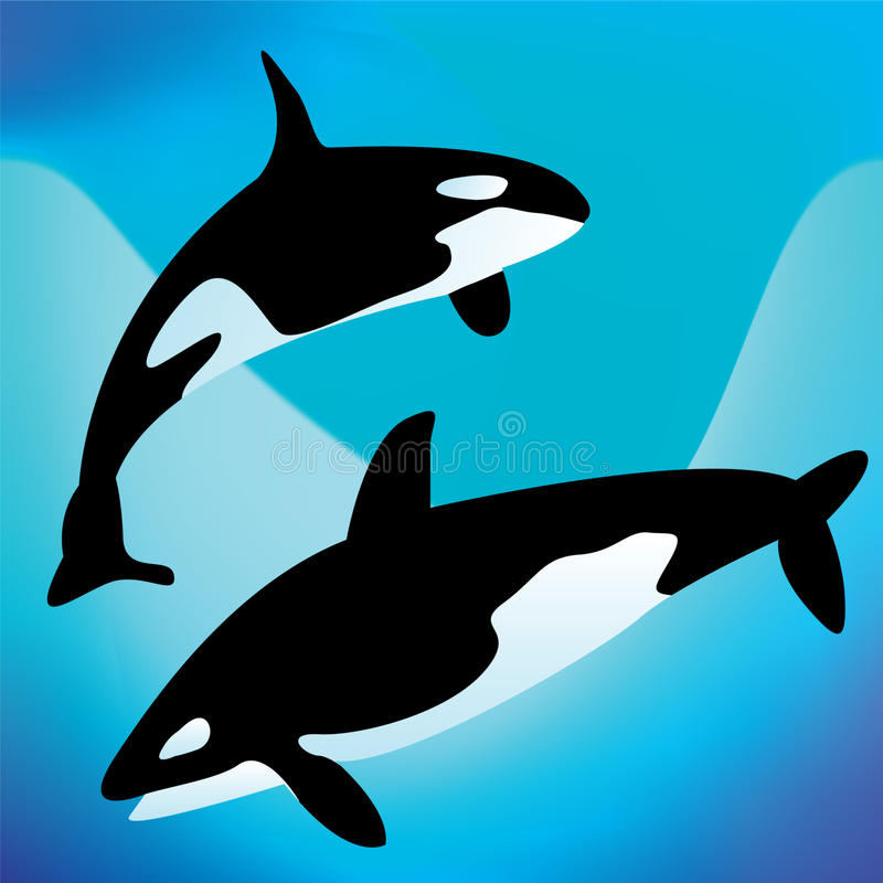 Download Killer whales stock vector. Image of symbol, figure, mammal - 10719182