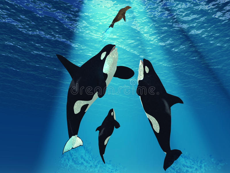 Download Killer Whales stock illustration. Image of bull, water - 25649319