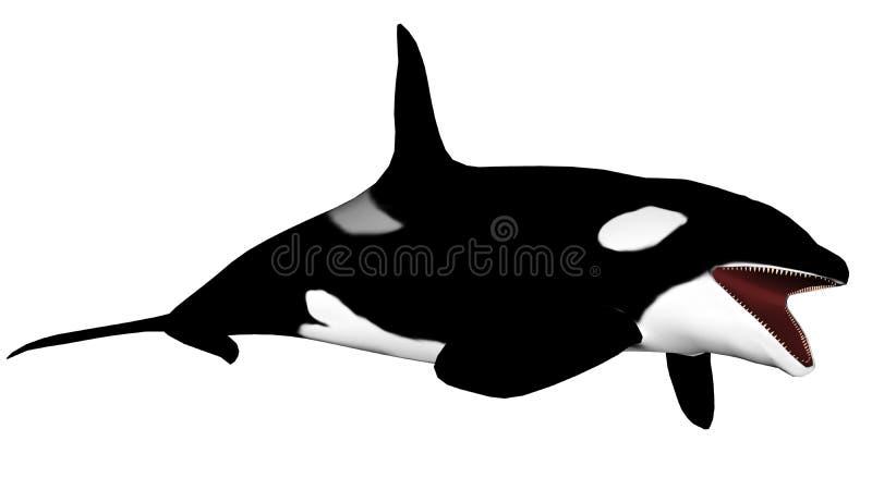 Killerwalöffnungsmund - 3D übertragen vektor abbildung