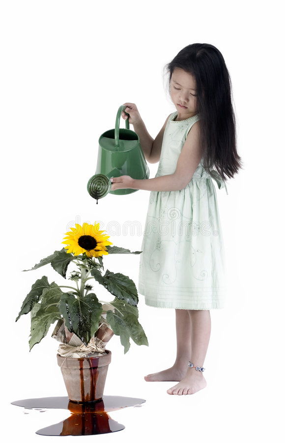 Killing our Planet. A young innocent child waters a plant with oil. She is unknowingly killing it. We are all so unaware of what we are doing stock image