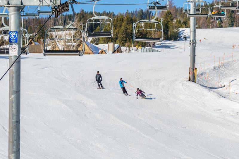 KIMBERLEY, CANADA - MAART 22, 2019: gehandicapte persoon die een Aanpassingssneeuwsporten berijden van zitten-skisvancouver stock fotografie