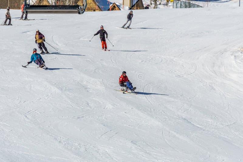 KIMBERLEY, CANADA - MAART 22, 2019: gehandicapte persoon die een Aanpassingssneeuwsporten berijden van zitten-skisvancouver royalty-vrije stock foto