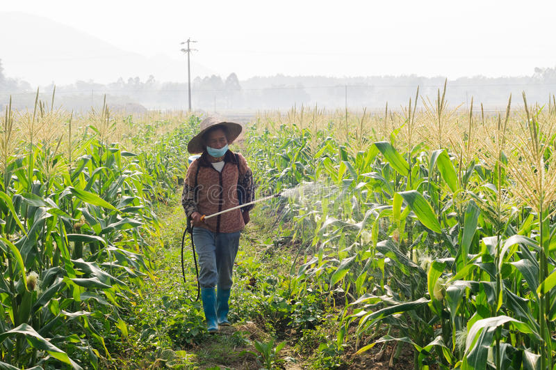 Kina havrebönder som besprutar bekämpningsmedel arkivbilder