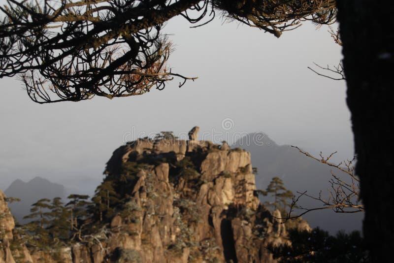 Kina Huangshan nationalpark royaltyfri bild