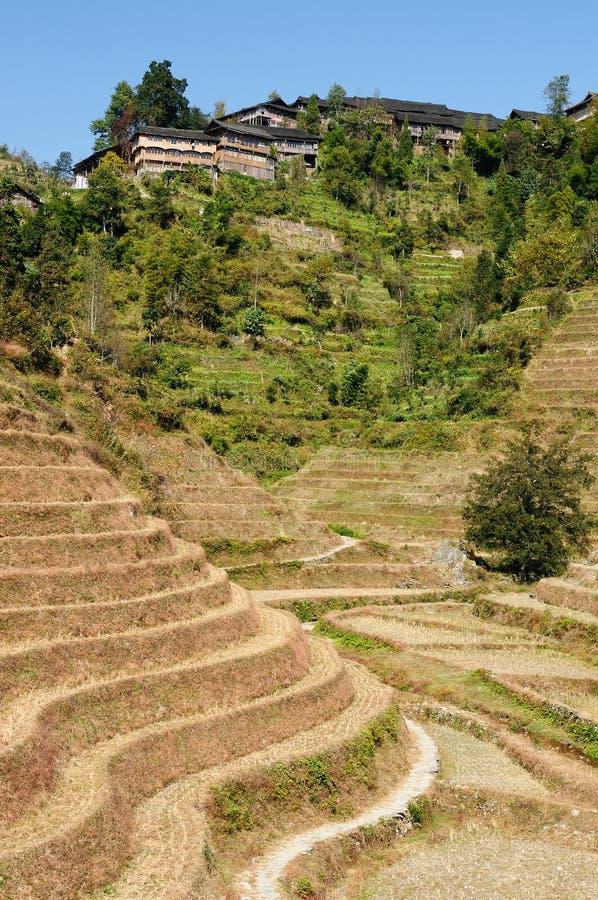 Kina landskap - ris för ryggraden för drake` s terrasserar arkivfoto