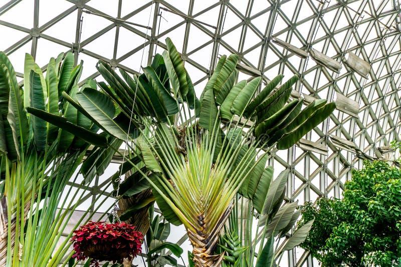 Kina Shanghai botanisk trädgårdväxthus 2 fotografering för bildbyråer