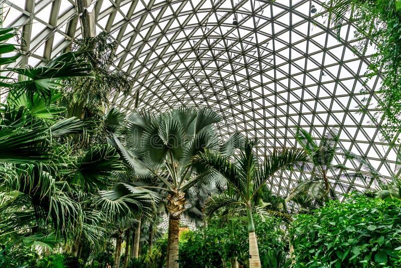 Kina Shanghai botanisk trädgårdväxthus 4 arkivfoto