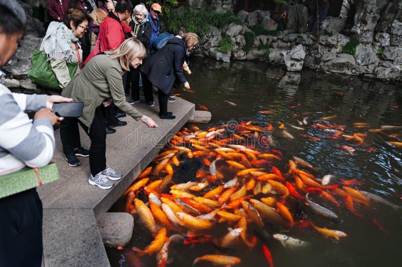 KINA SHANGHAI - NOVEMBER 5, 2017: Folket simning matar för den utsmyckade karp- eller Koi fisken i dammträdgården arkivbild