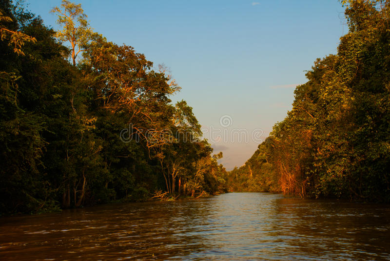 Kinabatangan-Fluss, Regenwald von Borneo-Insel, Sabah Malaysia Abendlandschaft von Bäumen nahe dem Wasser lizenzfreie stockbilder