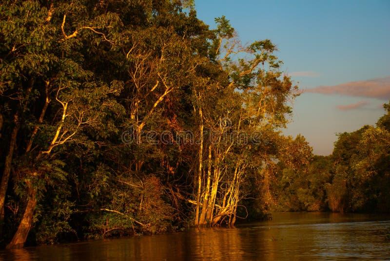 Kinabatangan-Fluss, Regenwald von Borneo-Insel, Sabah Malaysia Abendlandschaft von Bäumen nahe dem Wasser stockbilder