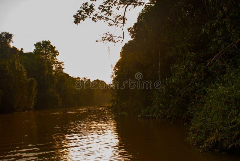 Kinabatangan-Fluss, Regenwald von Borneo-Insel, Sonnenuntergang Sabah Malaysia stockfotografie