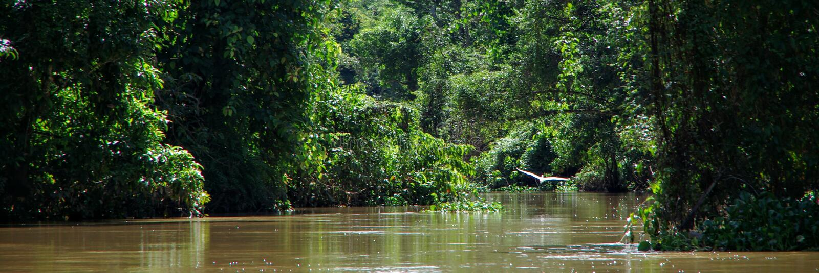 Kinabatangan River. The Kinabatangan River Malay: Sungai Kinabatangan is a river in Sabah, Malaysia. It is the second longest river in Malaysia, [1] with a royalty free stock photo